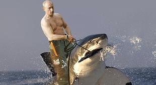 Putin and Shark